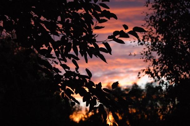 El umbral del crepúsculo